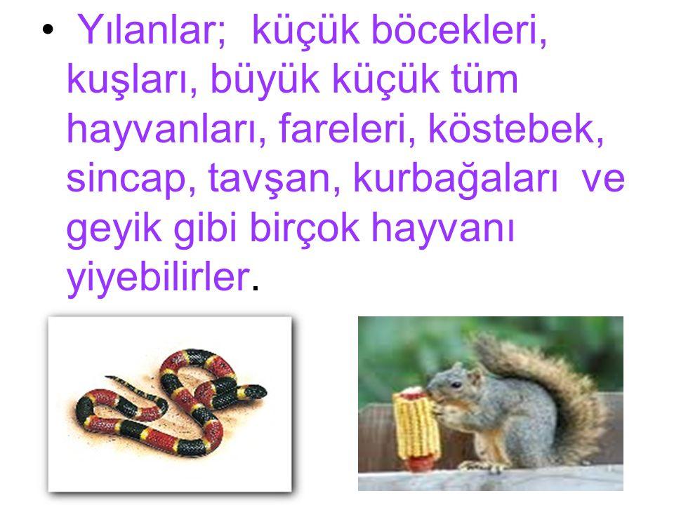 Yılanlar; küçük böcekleri, kuşları, büyük küçük tüm hayvanları, fareleri, köstebek, sincap, tavşan, kurbağaları ve geyik gibi birçok hayvanı yiyebilir