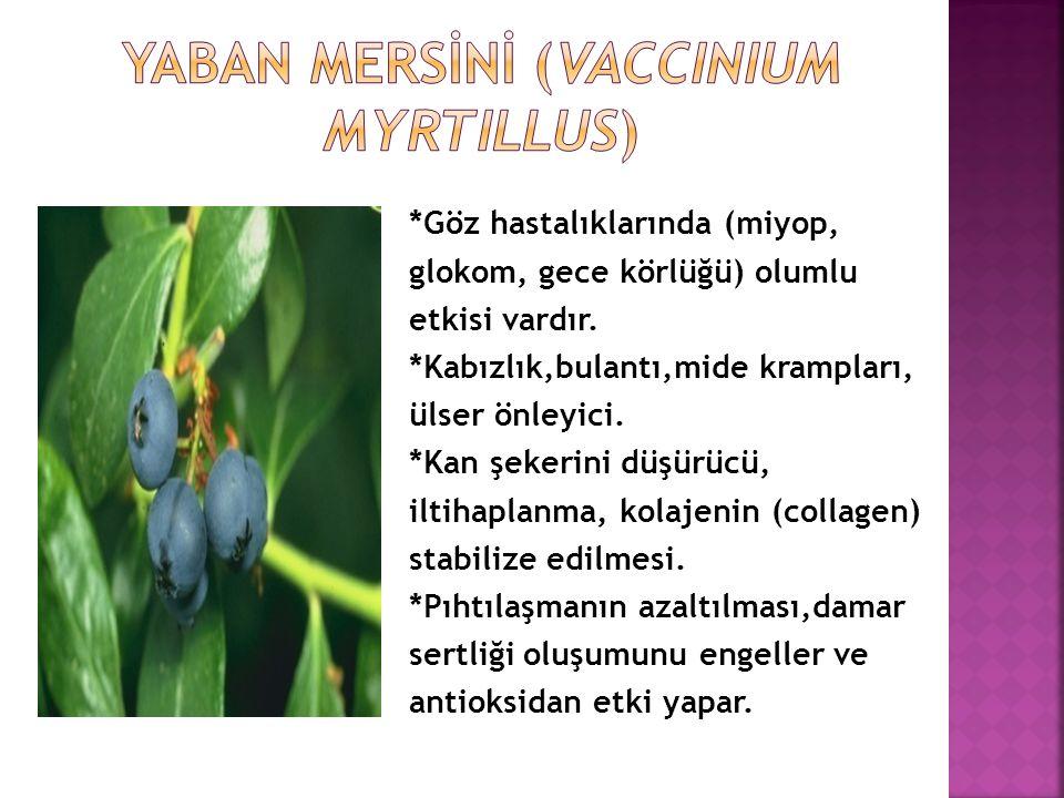 *Göz hastalıklarında (miyop, glokom, gece körlüğü) olumlu etkisi vardır.