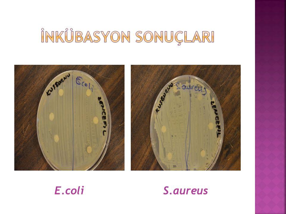 E.coliS.aureus