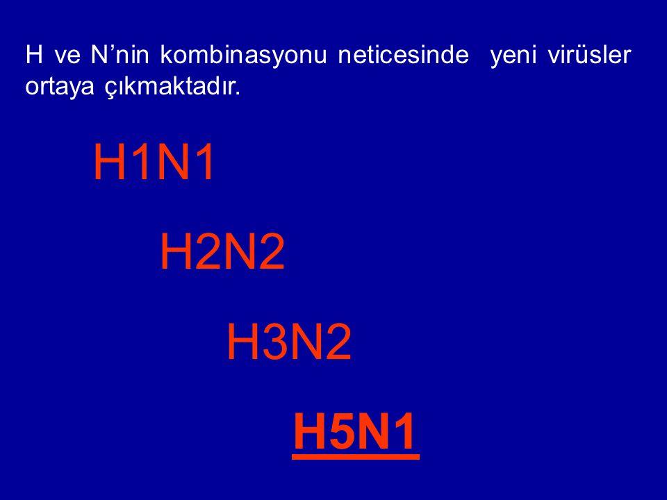 H ve N'nin kombinasyonu neticesinde yeni virüsler ortaya çıkmaktadır. H1N1 H2N2 H3N2 H5N1