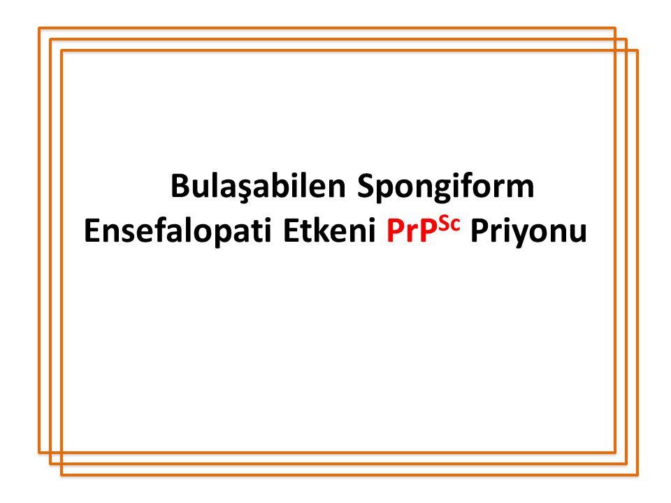 Bulaşabilen Spongiform Ensefalopati Etkeni PrP Sc Priyonu