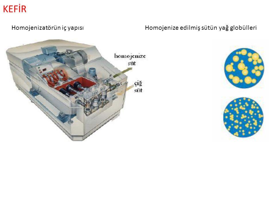 KEFİR Homojenizatörün iç yapısı Homojenize edilmiş sütün yağ globülleri