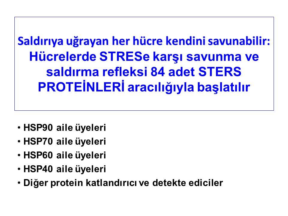 Saldırıya uğrayan her hücre kendini savunabilir: Saldırıya uğrayan her hücre kendini savunabilir: Hücrelerde STRESe karşı savunma ve saldırma refleksi 84 adet STERS PROTEİNLERİ aracılığıyla başlatılır HSP90 aile üyeleri HSP70 aile üyeleri HSP60 aile üyeleri HSP40 aile üyeleri Diğer protein katlandırıcı ve detekte ediciler