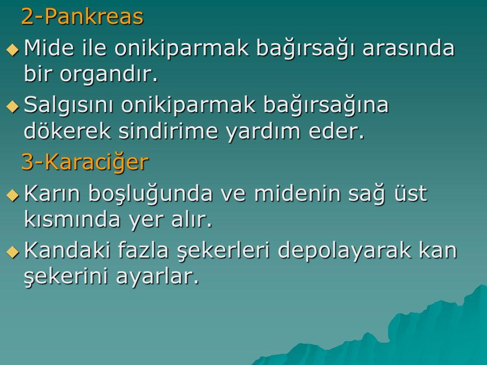 2-Pankreas 2-Pankreas  Mide ile onikiparmak bağırsağı arasında bir organdır.  Salgısını onikiparmak bağırsağına dökerek sindirime yardım eder. 3-Kar