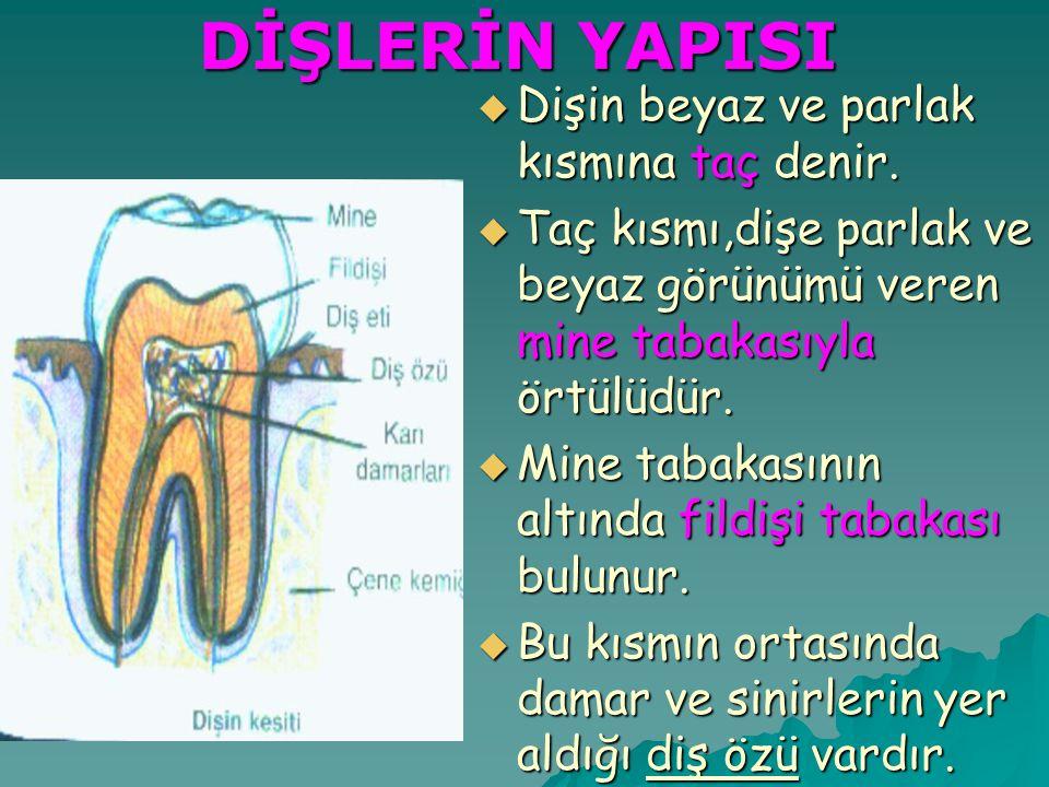 DİŞLERİN YAPISI  Dişin beyaz ve parlak kısmına taç denir.  Taç kısmı,dişe parlak ve beyaz görünümü veren mine tabakasıyla örtülüdür.  Mine tabakası