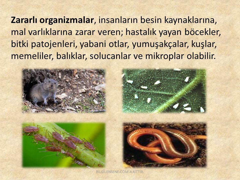 Hedef Türlerine Göre Pestisitler Rodentisit: Kemirgenlere karşı İnsektisit : Böcek, haşerelere karşı Fungusit: Mantarlara karşı Herbisit: Yabancı otlara karşı Molluist: Yumuşakçalara karşı Nematisit: Nematotlara karşı BİLGİLENSENE.COM A AİTTİR.