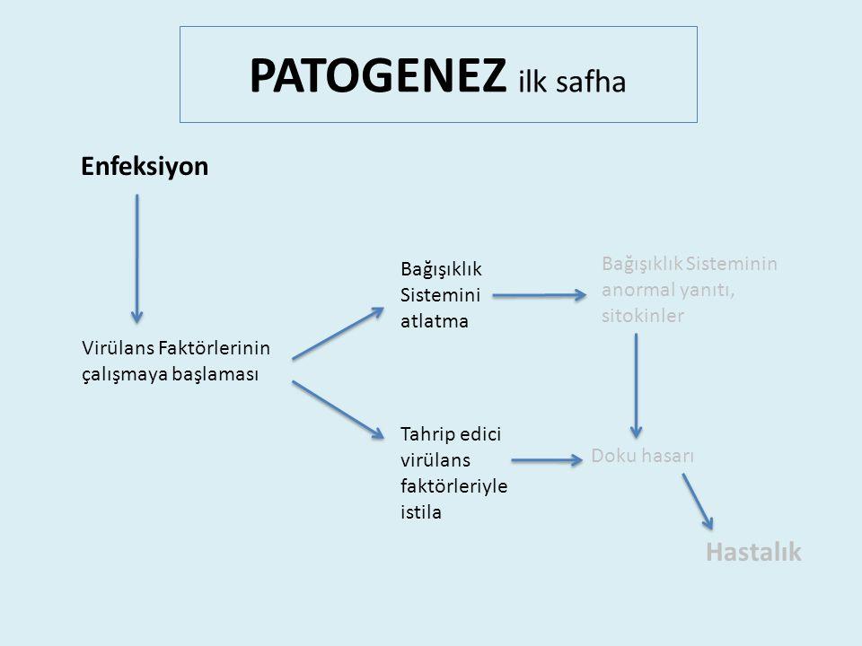 PATOGENEZ ilk safha Virülans Faktörlerinin çalışmaya başlaması Tahrip edici virülans faktörleriyle istila Bağışıklık Sistemini atlatma Enfeksiyon Bağışıklık Sisteminin anormal yanıtı, sitokinler Hastalık Doku hasarı