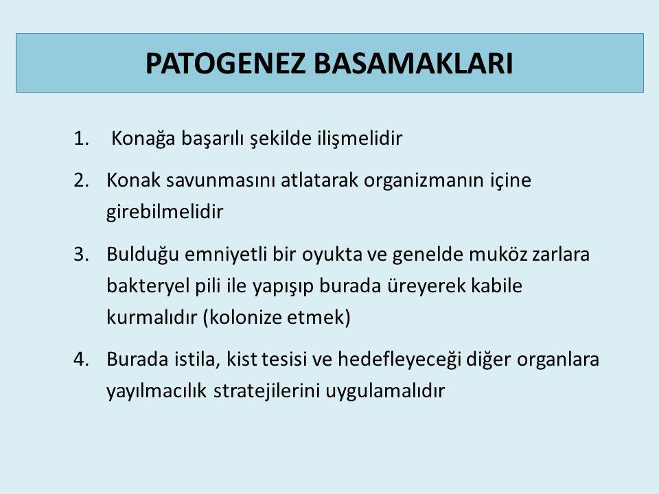 PATOGENEZ BASAMAKLARI 1.
