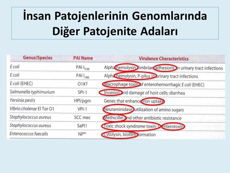 İnsan Patojenlerinin Genomlarında Diğer Patojenite Adaları