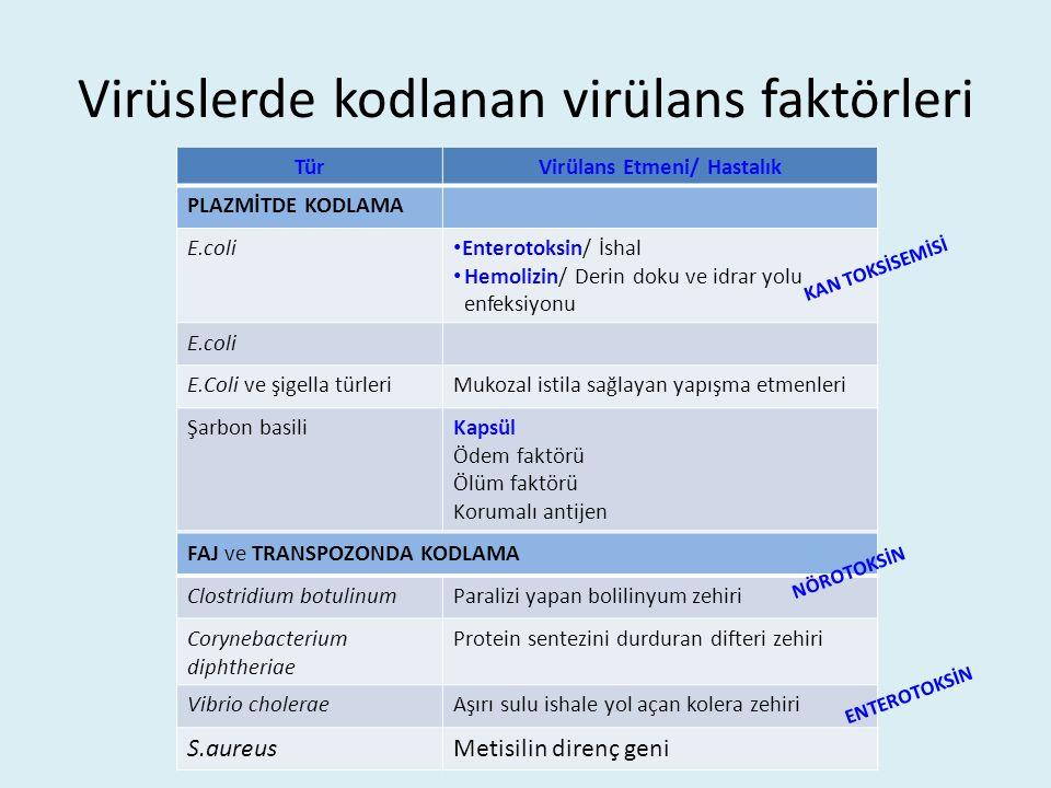 Virüslerde kodlanan virülans faktörleri TürVirülans Etmeni/ Hastalık PLAZMİTDE KODLAMA E.coli Enterotoksin/ İshal Hemolizin/ Derin doku ve idrar yolu enfeksiyonu E.coli E.Coli ve şigella türleriMukozal istila sağlayan yapışma etmenleri Şarbon basiliKapsül Ödem faktörü Ölüm faktörü Korumalı antijen FAJ ve TRANSPOZONDA KODLAMA Clostridium botulinumParalizi yapan bolilinyum zehiri Corynebacterium diphtheriae Protein sentezini durduran difteri zehiri Vibrio choleraeAşırı sulu ishale yol açan kolera zehiri S.aureusMetisilin direnç geni ENTEROTOKSİN NÖROTOKSİN KAN TOKSİSEMİSİ