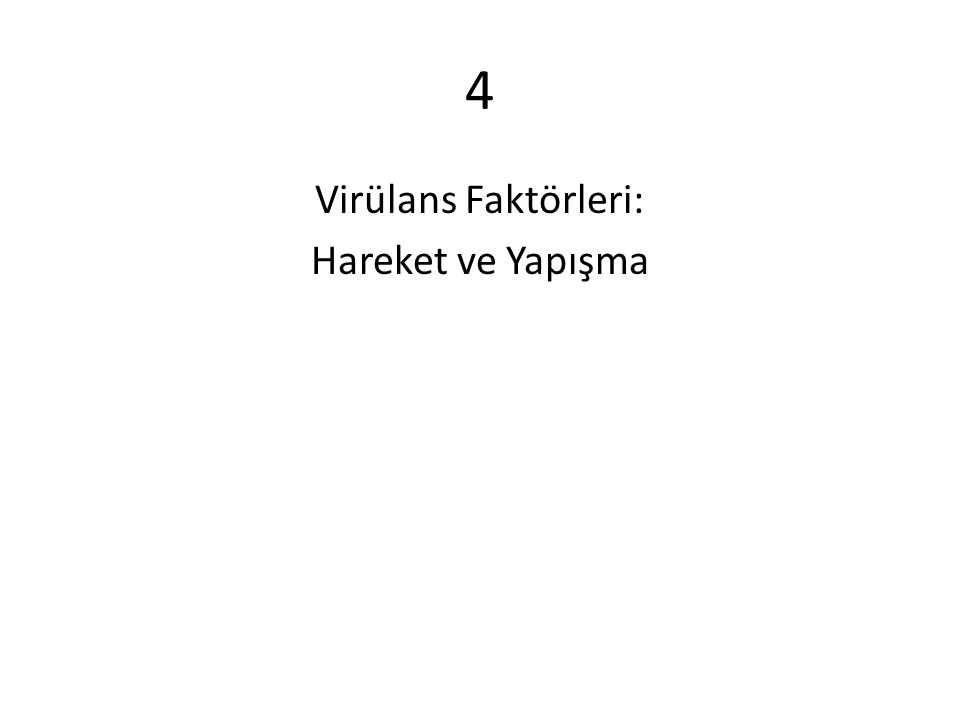 4 Virülans Faktörleri: Hareket ve Yapışma
