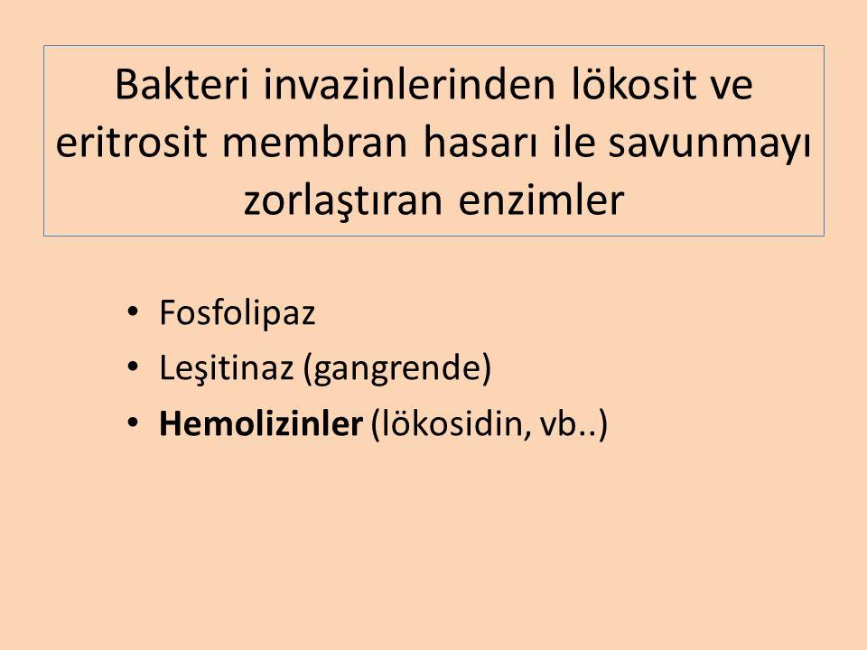 Bakteri invazinlerinden lökosit ve eritrosit membran hasarı ile savunmayı zorlaştıran enzimler Fosfolipaz Leşitinaz (gangrende) Hemolizinler (lökosidin, vb..)