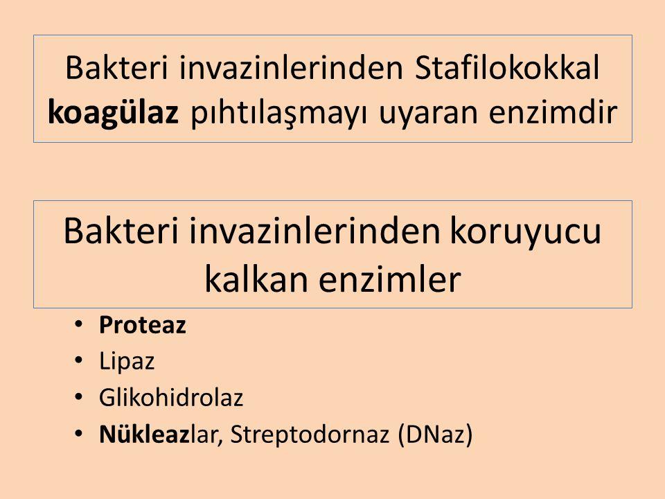 Bakteri invazinlerinden Stafilokokkal koagülaz pıhtılaşmayı uyaran enzimdir Proteaz Lipaz Glikohidrolaz Nükleazlar, Streptodornaz (DNaz) Bakteri invazinlerinden koruyucu kalkan enzimler