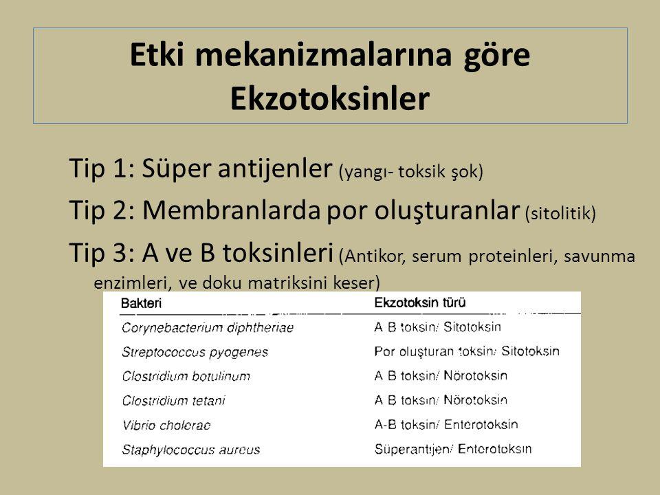 Etki mekanizmalarına göre Ekzotoksinler Tip 1: Süper antijenler (yangı- toksik şok) Tip 2: Membranlarda por oluşturanlar (sitolitik) Tip 3: A ve B toksinleri (Antikor, serum proteinleri, savunma enzimleri, ve doku matriksini keser)