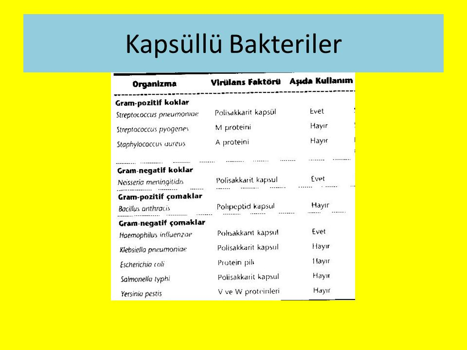 Kapsüllü Bakteriler