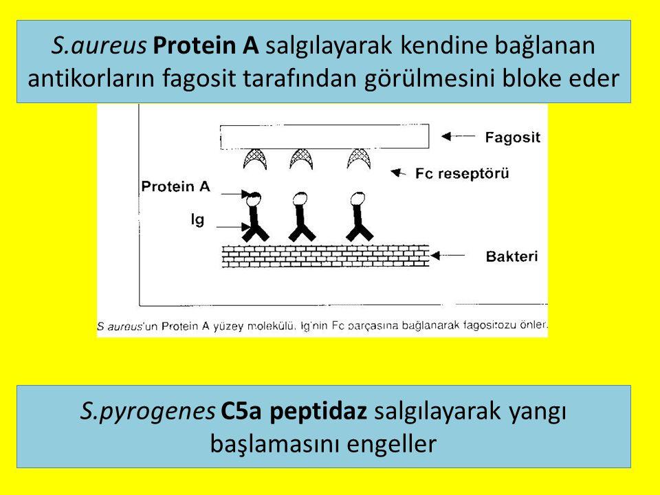 S.aureus Protein A salgılayarak kendine bağlanan antikorların fagosit tarafından görülmesini bloke eder S.pyrogenes C5a peptidaz salgılayarak yangı başlamasını engeller