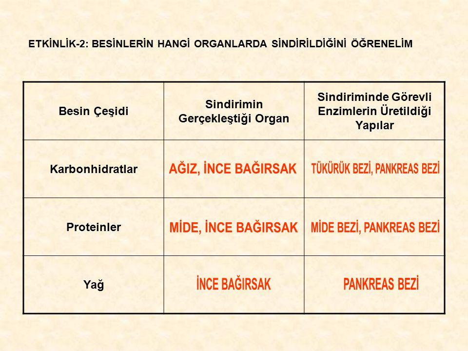 ETKİNLİK-2: BESİNLERİN HANGİ ORGANLARDA SİNDİRİLDİĞİNİ ÖĞRENELİM Besin Çeşidi Sindirimin Gerçekleştiği Organ Sindiriminde Görevli Enzimlerin Üretildiğ