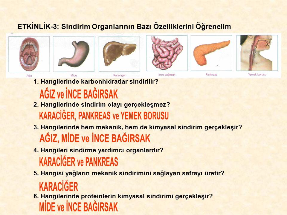 ETKİNLİK-3: Sindirim Organlarının Bazı Özelliklerini Öğrenelim 1. Hangilerinde karbonhidratlar sindirilir? 2. Hangilerinde sindirim olayı gerçekleşmez
