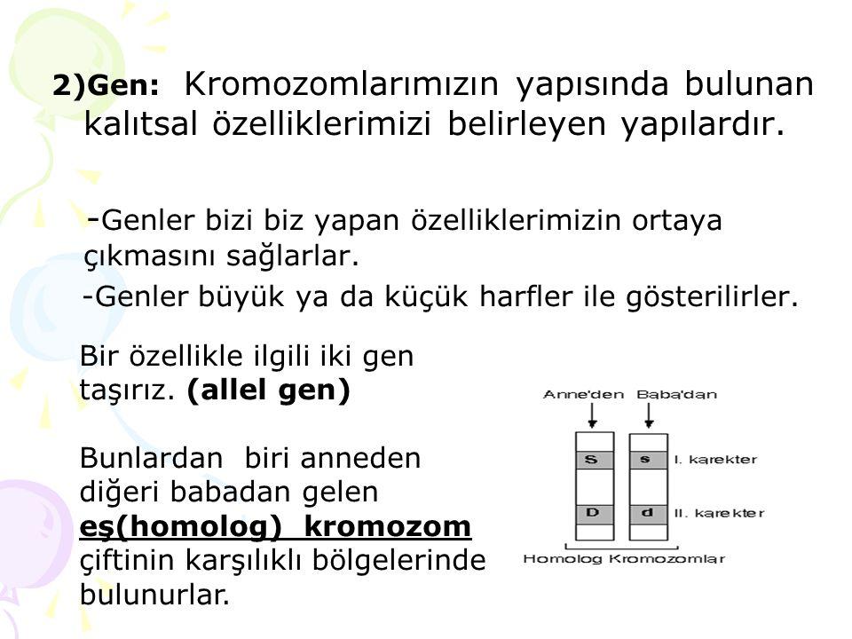 2)Gen: Kromozomlarımızın yapısında bulunan kalıtsal özelliklerimizi belirleyen yapılardır. - Genler bizi biz yapan özelliklerimizin ortaya çıkmasını s