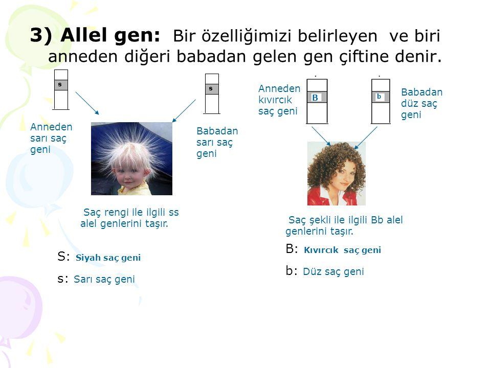 3) Allel gen: Bir özelliğimizi belirleyen ve biri anneden diğeri babadan gelen gen çiftine denir. Anneden sarı saç geni Babadan sarı saç geni B b Anne