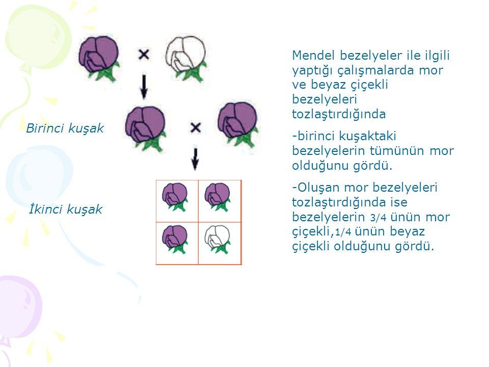 Birinci kuşak İkinci kuşak Mendel bezelyeler ile ilgili yaptığı çalışmalarda mor ve beyaz çiçekli bezelyeleri tozlaştırdığında -birinci kuşaktaki beze