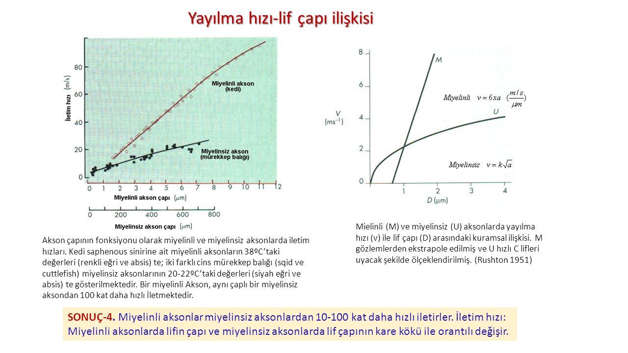 Yayılma hızı-lif çapı ilişkisi Mielinli (M) ve miyelinsiz (U) aksonlarda yayılma hızı (v) ile lif çapı (D) arasındaki kuramsal ilişkisi. M gözlemlerde
