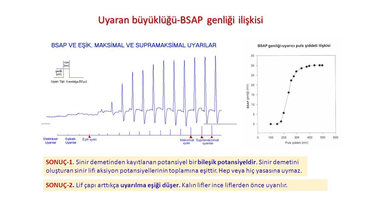 Uyaran büyüklüğü-BSAP genliği ilişkisi SONUÇ-1. Sinir demetinden kayıtlanan potansiyel bir bileşik potansiyeldir. Sinir demetini oluşturan sinir lifi