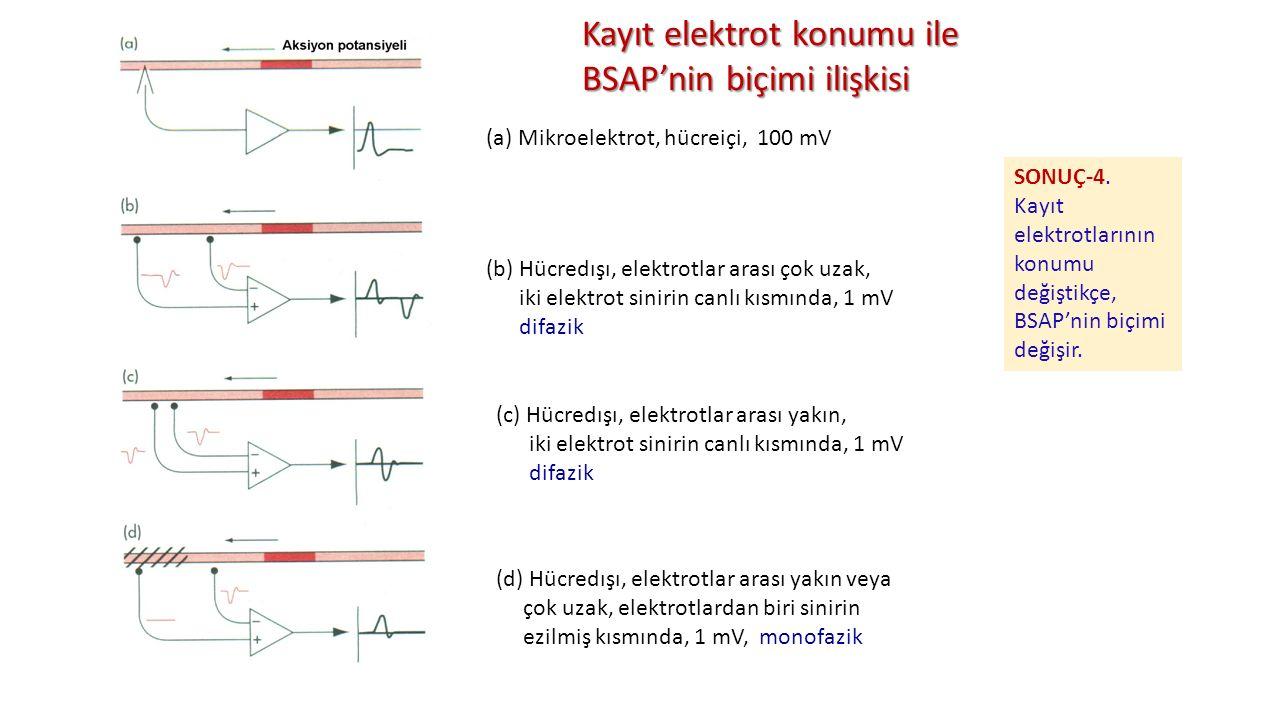 (a) Mikroelektrot, hücreiçi, 100 mV (b) Hücredışı, elektrotlar arası çok uzak, iki elektrot sinirin canlı kısmında, 1 mV difazik (c) Hücredışı, elektr