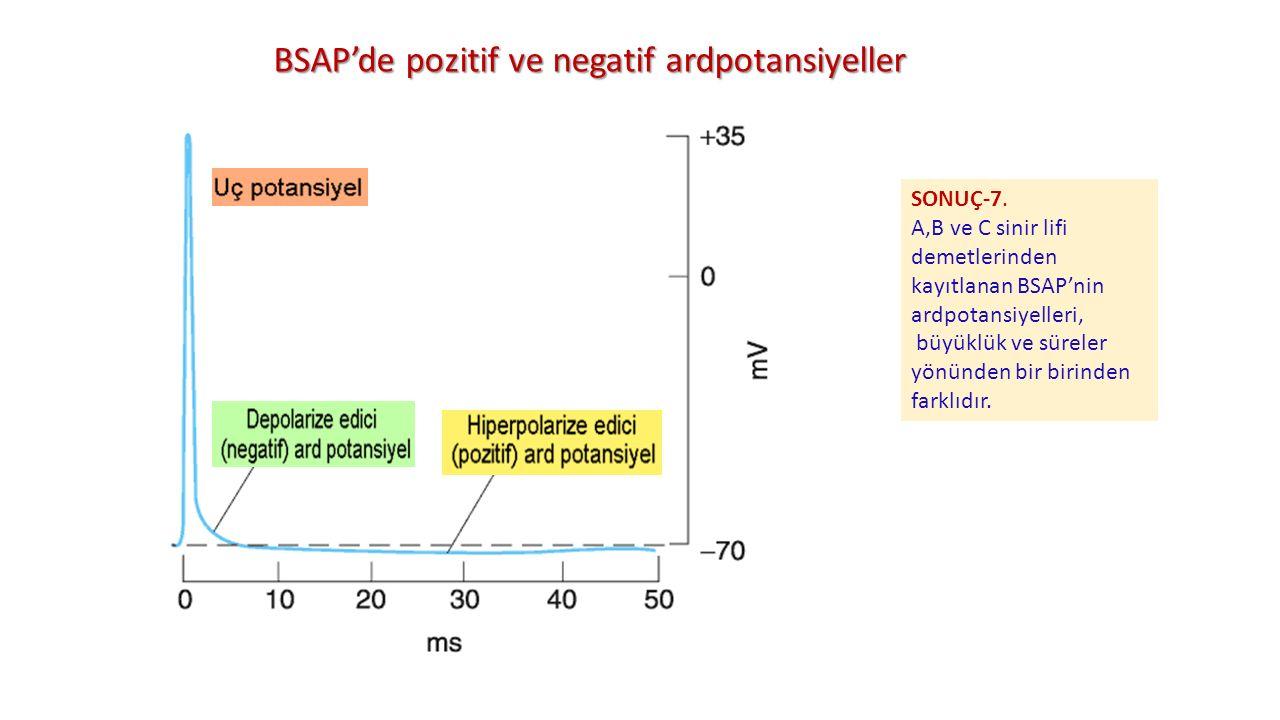 BSAP'de pozitif ve negatif ardpotansiyeller SONUÇ-7. A,B ve C sinir lifi demetlerinden kayıtlanan BSAP'nin ardpotansiyelleri, büyüklük ve süreler yönü