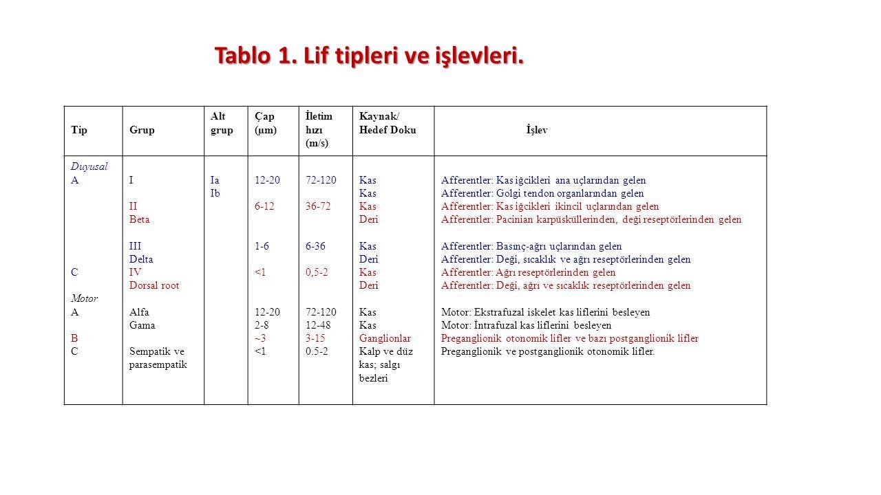 Tablo 1. Lif tipleri ve işlevleri. TipGrup Alt grup Çap (µm) İletim hızı (m/s) Kaynak/ Hedef Doku İşlev Duyusal A C Motor A B C I II Beta III Delta IV