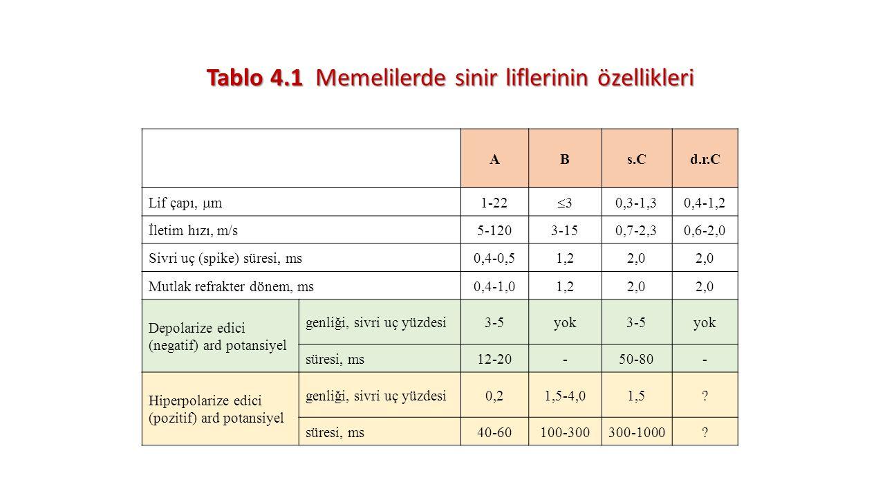 Tablo 4.1 Memelilerde sinir liflerinin özellikleri ABs.Cd.r.C Lif çapı,  m 1-22 33 0,3-1,30,4-1,2 İletim hızı, m/s5-1203-150,7-2,30,6-2,0 Sivri uç