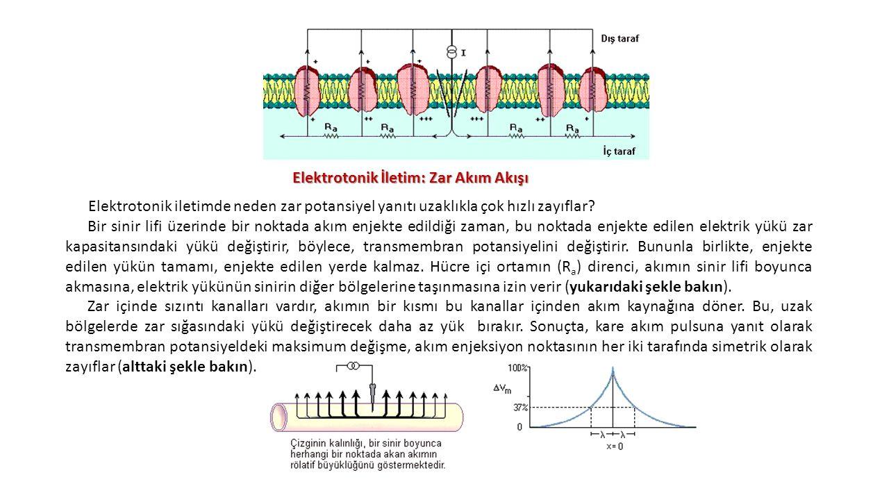 Elektrotonik İletim: Zar Akım Akışı Elektrotonik iletimde neden zar potansiyel yanıtı uzaklıkla çok hızlı zayıflar? Bir sinir lifi üzerinde bir noktad