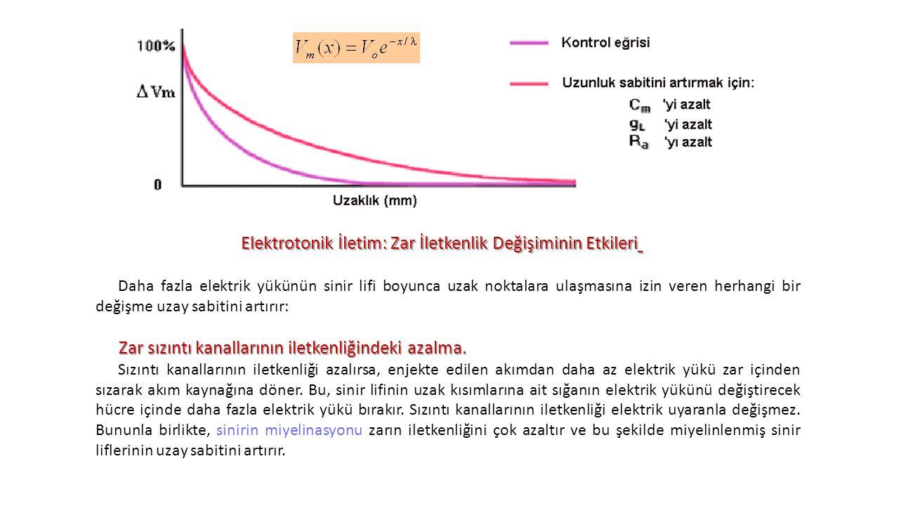 Elektrotonik İletim: Zar İletkenlik Değişiminin Etkileri Daha fazla elektrik yükünün sinir lifi boyunca uzak noktalara ulaşmasına izin veren herhangi