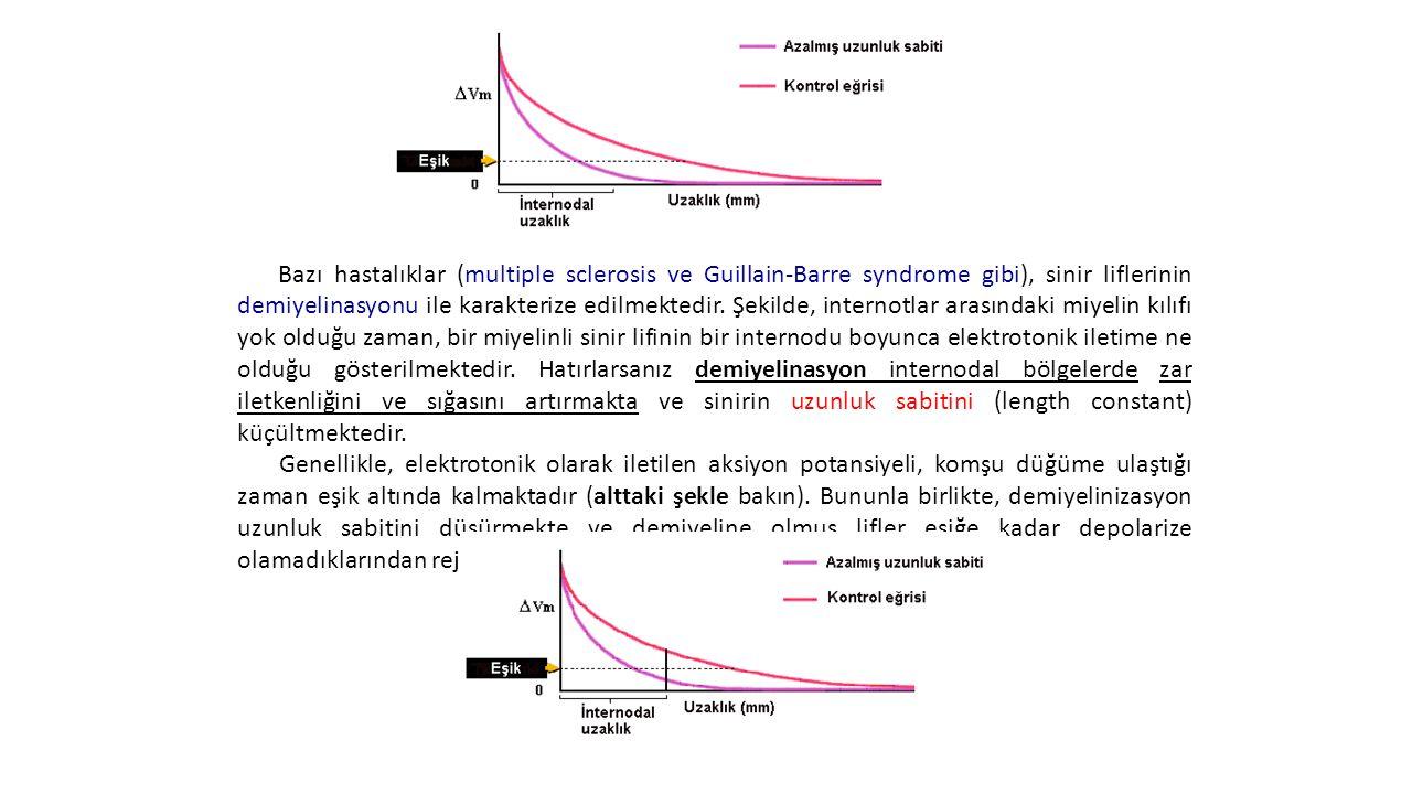 Demiyelinasyonun Uzunluk Sabitine Etkisi Bazı hastalıklar (multiple sclerosis ve Guillain-Barre syndrome gibi), sinir liflerinin demiyelinasyonu ile k