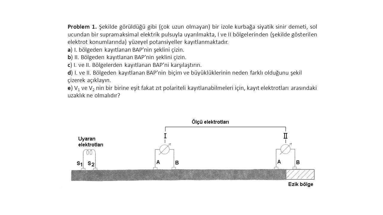 Problem 1. Şekilde görüldüğü gibi (çok uzun olmayan) bir izole kurbağa siyatik sinir demeti, sol ucundan bir supramaksimal elektrik pulsuyla uyarılmak