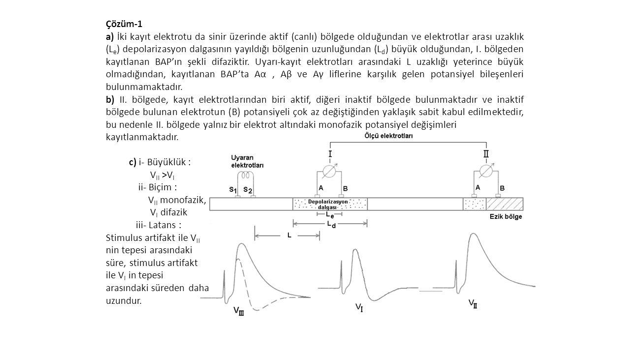 Çözüm-1 a) İki kayıt elektrotu da sinir üzerinde aktif (canlı) bölgede olduğundan ve elektrotlar arası uzaklık (L e ) depolarizasyon dalgasının yayıld