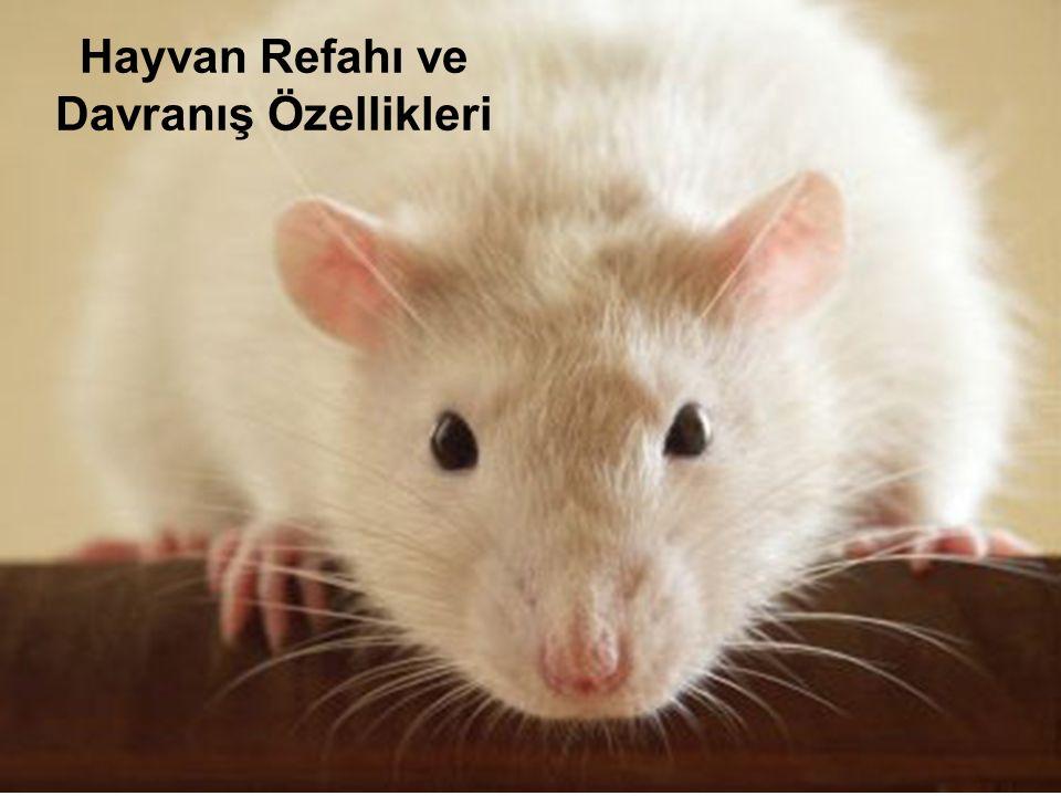 Hayvan Refahı ve Davranış Özellikleri