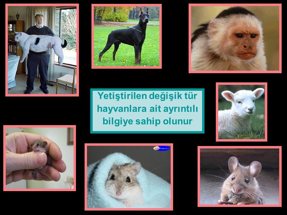Yetiştirilen değişik tür hayvanlara ait ayrıntılı bilgiye sahip olunur