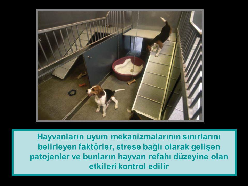 Hayvanların uyum mekanizmalarının sınırlarını belirleyen faktörler, strese bağlı olarak gelişen patojenler ve bunların hayvan refahı düzeyine olan etkileri kontrol edilir