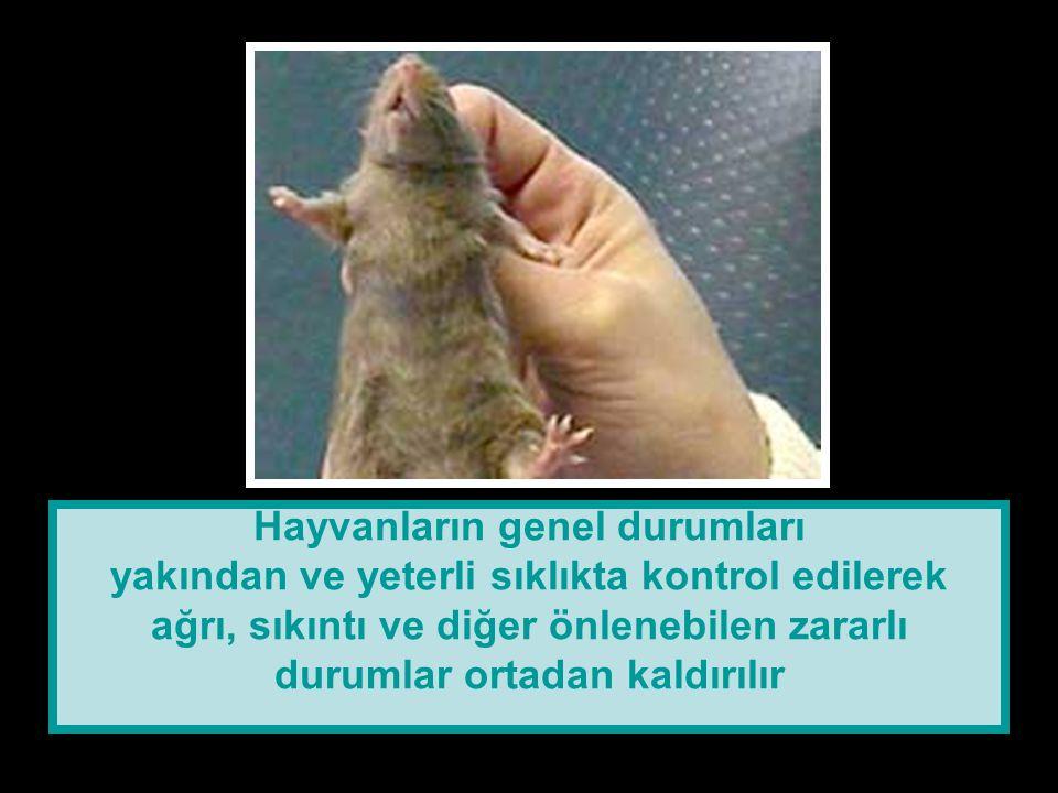 Hayvanların genel durumları yakından ve yeterli sıklıkta kontrol edilerek ağrı, sıkıntı ve diğer önlenebilen zararlı durumlar ortadan kaldırılır