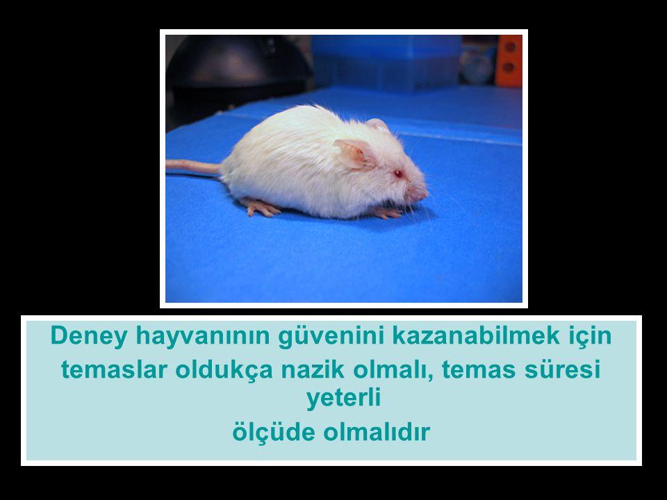 Deney hayvanının güvenini kazanabilmek için temaslar oldukça nazik olmalı, temas süresi yeterli ölçüde olmalıdır