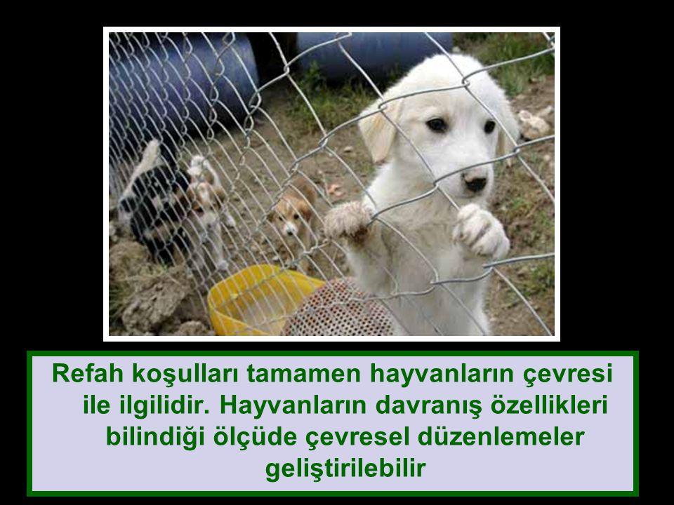 Refah koşulları tamamen hayvanların çevresi ile ilgilidir.