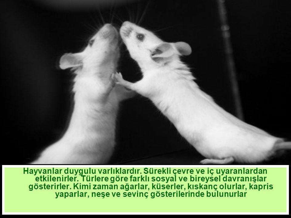 Hayvanlar duygulu varlıklardır. Sürekli çevre ve iç uyaranlardan etkilenirler.
