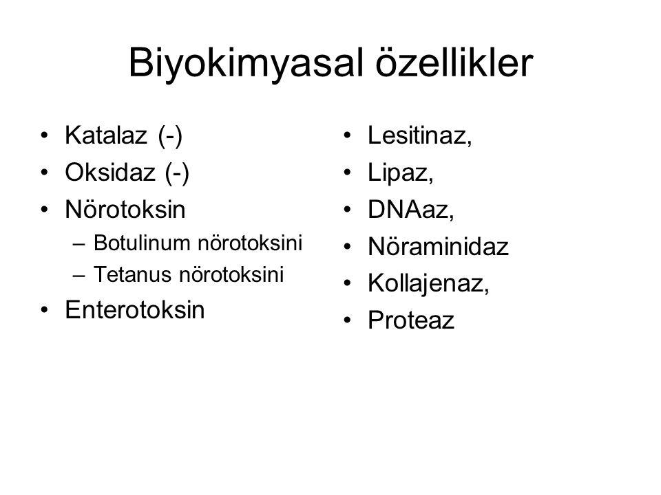 Biyokimyasal özellikler Katalaz (-) Oksidaz (-) Nörotoksin –Botulinum nörotoksini –Tetanus nörotoksini Enterotoksin Lesitinaz, Lipaz, DNAaz, Nöraminid