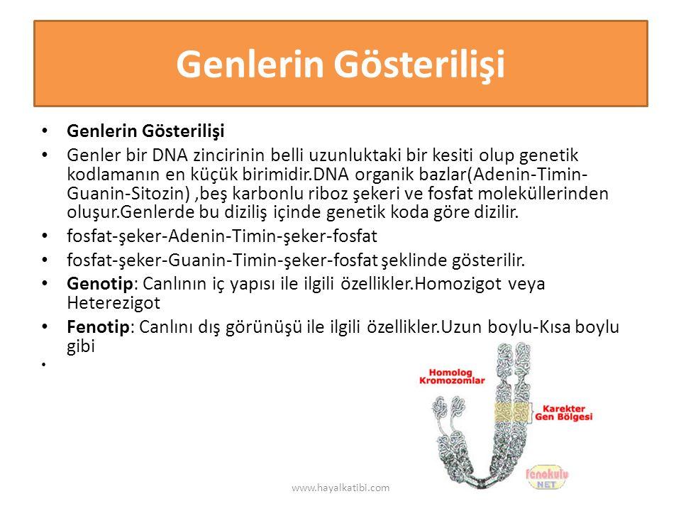 Genlerin Gösterilişi Genler bir DNA zincirinin belli uzunluktaki bir kesiti olup genetik kodlamanın en küçük birimidir.DNA organik bazlar(Adenin-Timin- Guanin-Sitozin),beş karbonlu riboz şekeri ve fosfat moleküllerinden oluşur.Genlerde bu diziliş içinde genetik koda göre dizilir.