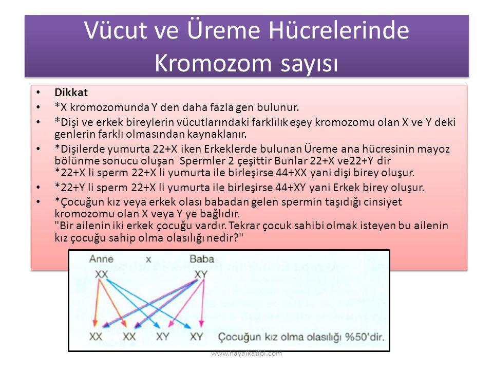 Vücut ve Üreme Hücrelerinde Kromozom sayısı Dikkat *X kromozomunda Y den daha fazla gen bulunur.