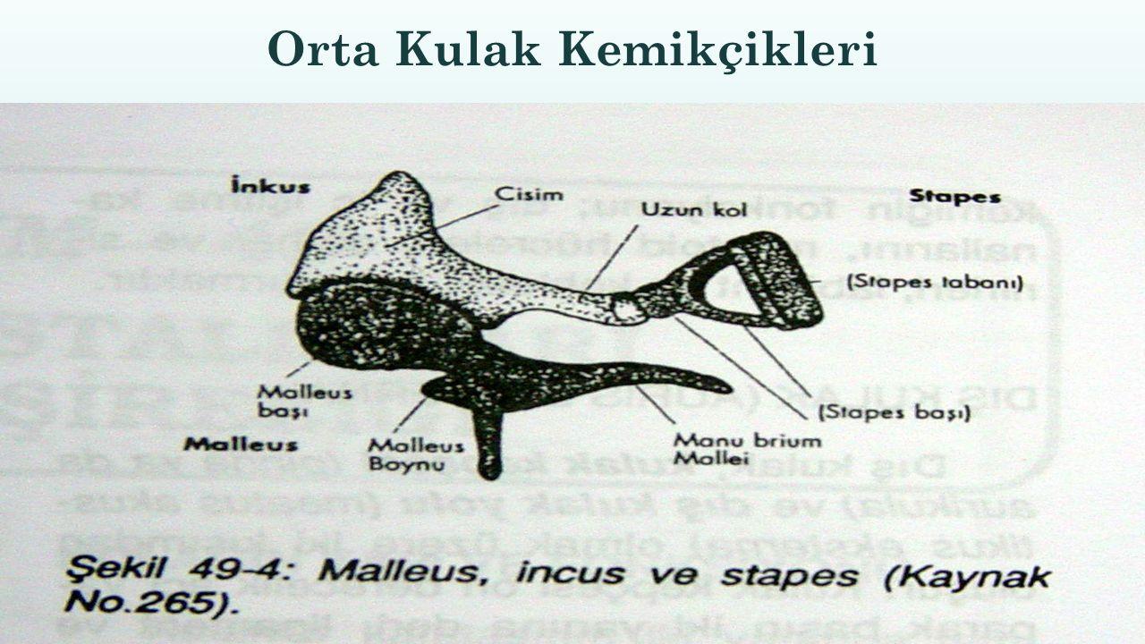 Orta Kulak Kemikçikleri