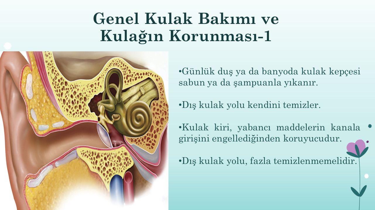 Genel Kulak Bakımı ve Kulağın Korunması-1 Günlük duş ya da banyoda kulak kepçesi sabun ya da şampuanla yıkanır. Dış kulak yolu kendini temizler. Kulak