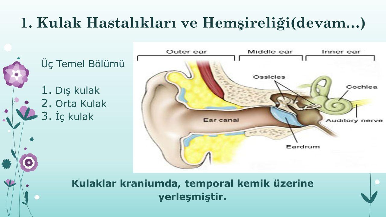 1. Kulak Hastalıkları ve Hemşireliği(devam…) Üç Temel Bölümü 1. Dış kulak 2. Orta Kulak 3. İç kulak Kulaklar kraniumda, temporal kemik üzerine yerleşm