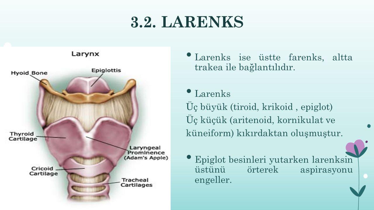 3.2.LARENKS Larenks ise üstte farenks, altta trakea ile bağlantılıdır.